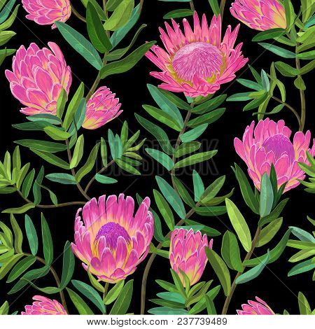 Floral Seamless Pattern With Hand Drawn Protea Flowers. Botanical Decorative Background For Fabric,