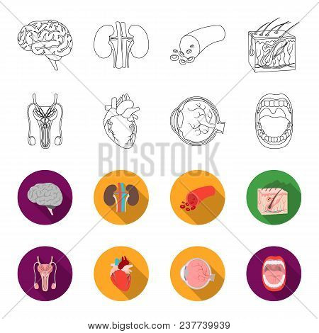 Male System, Heart, Eyeball, Oral Cavity. Organs Set Collection Icons In Outline, Flet Style Vector