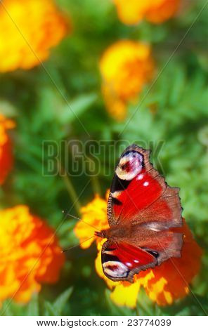 Beautiful Red Butterfly On Flowers