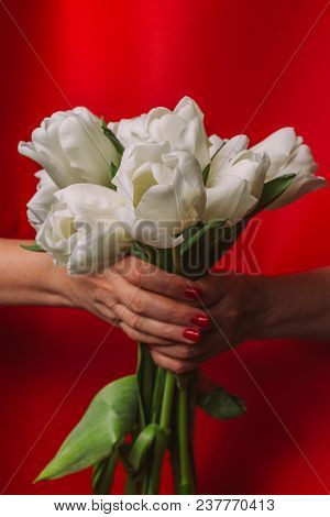 Bouquet Of White Tulips In Female Hands On A Red Background, Holiday, Gift, Congratulation