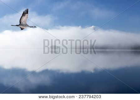 View Of A Crane In Flight In Morning Lit. Foggy Morning, But Bright Sunshine This Side The Lake.