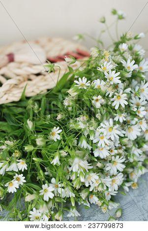 Daisy Camomile Fowers Wooden Garden Table Blue Background. Flower Bouquet Arrangement Composition Gi