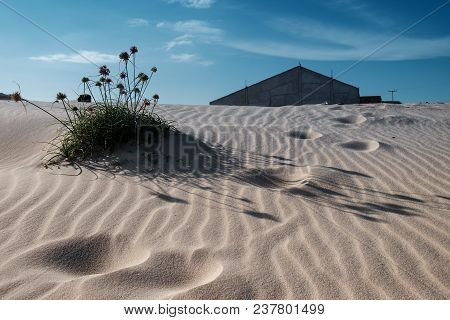 A Desert With A Ripple Structure Made By The Wind With A Shrub Resisting The Avance With A Abonadone