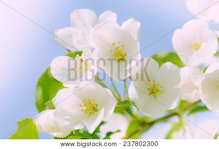 Abstract floral background of spring flowers