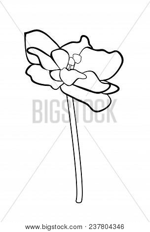 Vector Illustration, Isolated Violet Saintpaulia Flower In Black And White Colors
