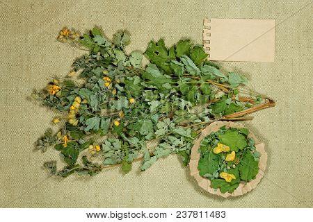 Celandine. Dry Herbs For Use In Alternative Medicine, Phytotherapy, Spa, Herbal Cosmetics. Preparing