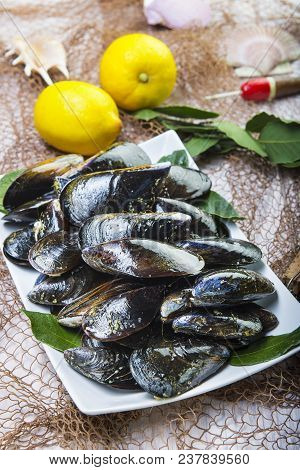 Fresh And Alive Mussels For Cooking
