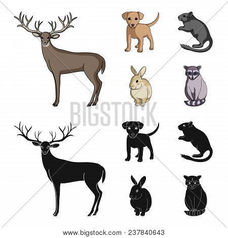 Puppy, Rodent, Rabbit And Other Animal Species.animals Set Collection Icons In Cartoon, Black Style