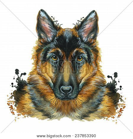 Watercolor Printshop, Print On The Theme Of The Breed Of Dogs, Mammals, Animals, Breed German Shephe