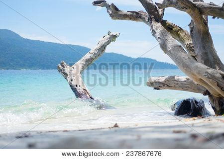 Long Beach Sea With Timber And Blue Sky.