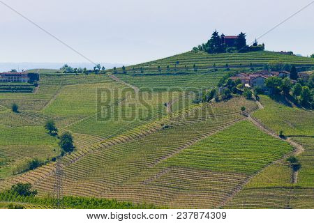 Beautiful Italian Landscape. Vineyards From Langhe Region,italy Agriculture. Unesco World Heritage S