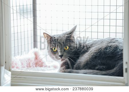 Safety Window Gray Cat. A Special Enclosure For Cat Safety Is Installed On The Window