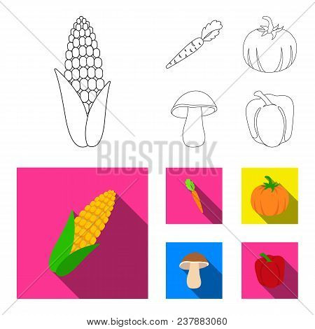 Corn Corn, Vitamin Carrots With Tops, Pumpkin, Forest Mushroom. Vegetables Set Collection Icons In O