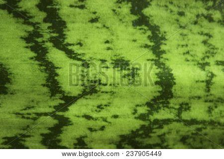 Green Nature Texture, Close Up. Blurred Nature Background. Sanseurera Close - Up. Green Leaf Texture