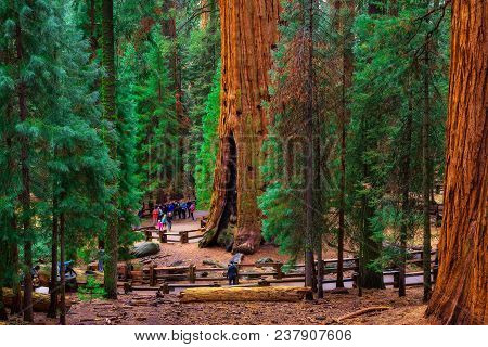 Sequoia National Park, California, Usa - January 4, 2018 : Group Of Tourists By The General Sherman