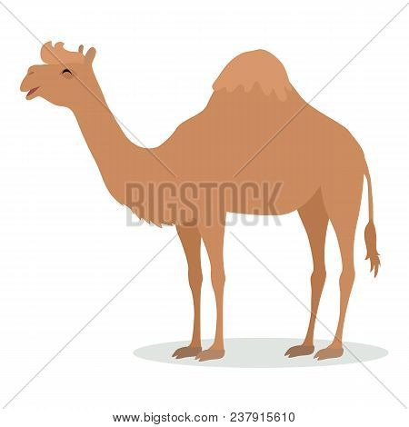 Dromedary Camel Cartoon Character. Funny Camel With One Hump Flat Vector Isolated On White. African