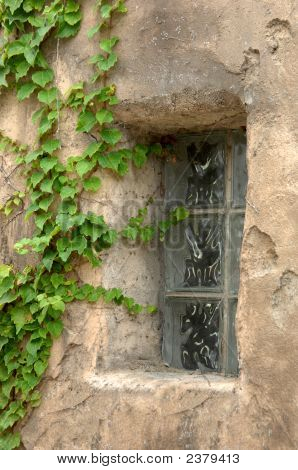 Creeping Ivy And Window Frame
