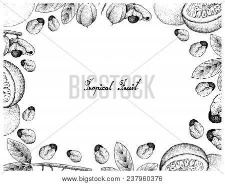 Tropical Fruits, Illustration Frame Of Hand Drawn Sketch Of Passion Fruit Or Passiflora Edulis And A