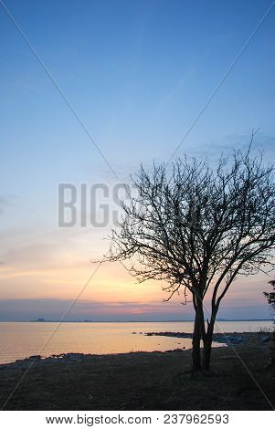 Tree Silhouette By A Beautiful Sunset At The Swedish Island Oland In The Baltic Sea