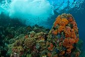 Waves crashing on a seamount with a general reef scene Raja Ampat Indonesia poster