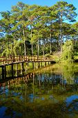 Beautiful scene of  Than Tho lake, Da Lat city, Vietnam in morning, row of pine tree reflect on surface water, small bridge  cross a lake among pine forest, blue sky and fresh air make wonderful ecotourism in summer poster