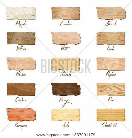 Big Vector Set With Samples Of Maple, Oak, Birch, Ash, Chestnut, Linden, Willow, Poplar, Pine, Cedar