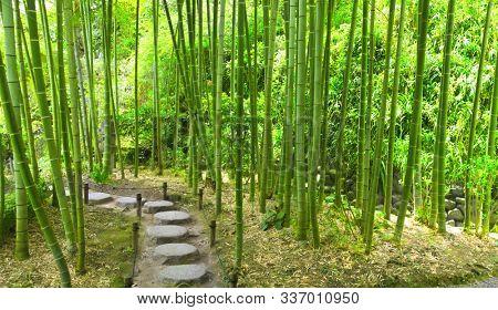 Stone footpath in bamboo garden, Hasedera temple, Kamakura, Japan, Asia