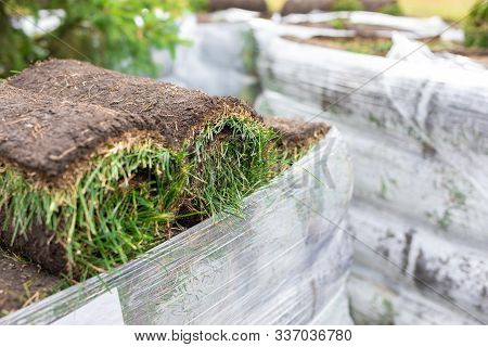 Stack Of Turf Grass Rolls For A Lawn. Carpet Of Turf, Roll Of Sod, Turf Grass Roll For Landscaping.