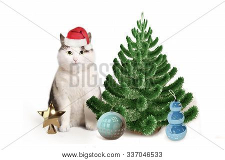 Funny Cat In Santa Hat Christmas Tree And Toys With Copy Space Christmas Post Card Photo Isolated On