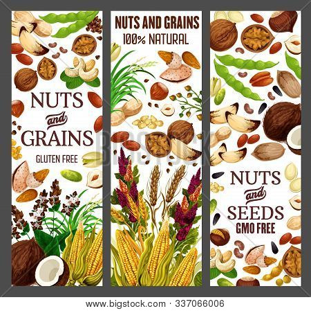 Nuts And Cereals, Natural Organic Gmo Free Grain, Gluten Free Super Food Nutrition. Vector Healthy V
