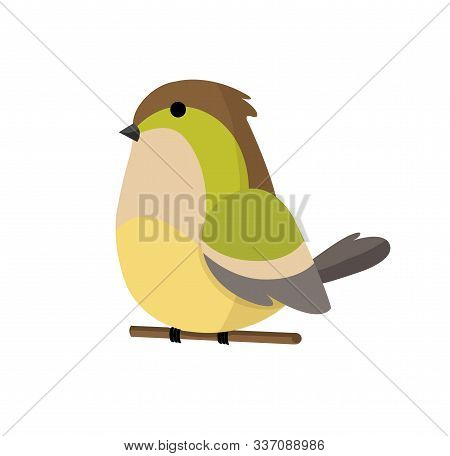Cute Little Colorful Bird Isolated On White Background. Common House Sparrow. Small Bird In Cute Car