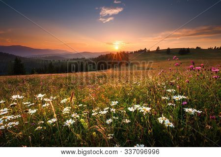 Scenic Spring Landscape With Valley With Wildflowers At Sunset. Beautiful Mountain Hill With Green F