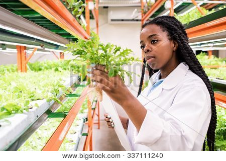 Young African woman in whitecoat holding one of green seedlings while studying its biological characteristics