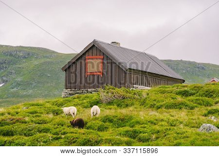 Hut Wooden Mountain Huts In Mountain Pass Norway. Norwegian Landscape With Typical Scandinavian Gras