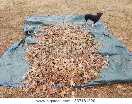 poster of black dog and brown leaves and blue tarp