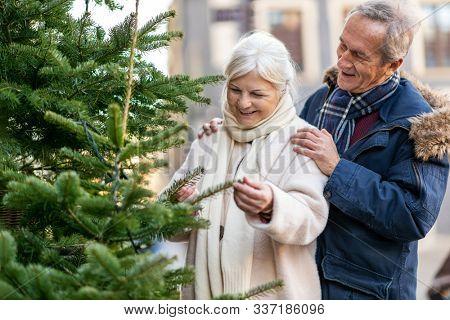 Senior couple choosing Christmas tree at Christmas market