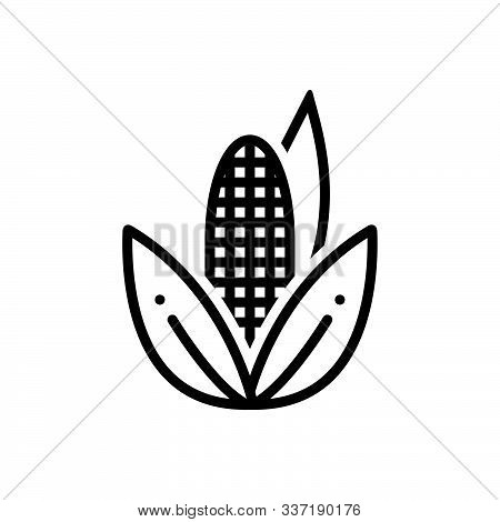 Black Line Icon For Corn Maize Agricultural Nutrition Sweetcorn Popcorn