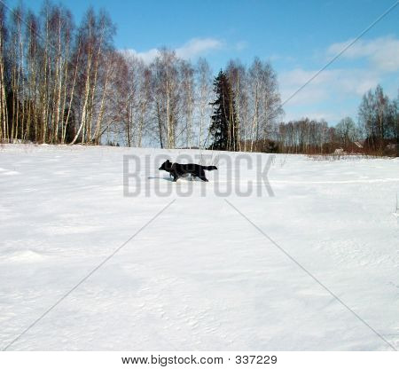 poster of dog run on field