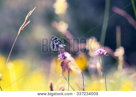 Nature Background Butterfly. Butterfly Insect In Nature. Nature Insect Butterfly On Pink Flower. But