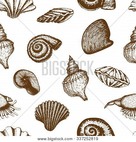Seamless Seashell Pattern Isolated On White. Vintage Hand Drawn Background Of Various Beautiful Engr