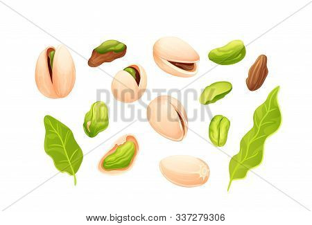 Pistachios Nut Set. Vector Nuts Isolated On White