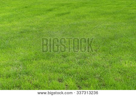 Green Grass On A Golf Course Or Green Lawn. Background From Fresh Green Grass, Sports Field For Foot