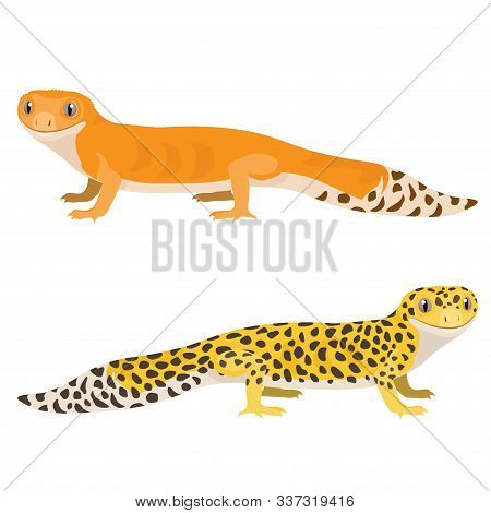 Leopard Gecko Vector Illustration. Cartoon Spotted Gecko Isolated On White Background.