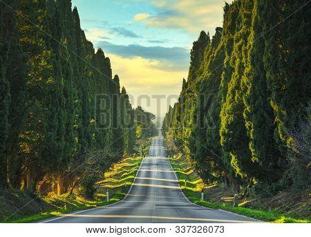 Bolgheri Famous Cypresses Trees Straight Boulevard Landscape. Maremma Landmark, Tuscany, Italy, Euro