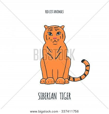 Siberian Tiger Red List Book Animal. Gorgeous Exotic Carnivorous Animal With Stripy Coat. Graceful L