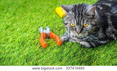 Artificial Grass Background, Copy Space. Cat And Baby Toys Lying On The Green Synthetic Artificial T