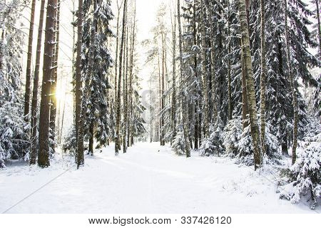 Nature, Landscape, Walking Concept-beautiful Winter Landscape With Snow-covered Trees Under Sunlight