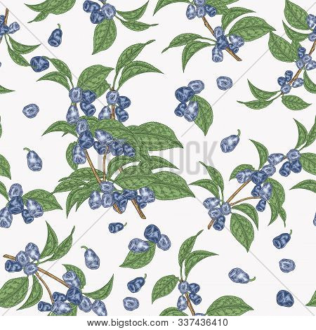 Colorful Honeysuckle Leaves And Berries Seamless Pattern. Lonicera Japonica. Vector Illustration. De