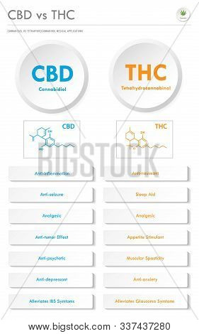 Cbd Vs Thc Medical Applications Vertical Business Infographic Illustration About Cannabis As Herbal
