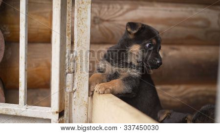 A closeup muzzle of an East European Shepherd dog tilts its head in surprise and turns it. Funny puppy of a shepherd dog. East European Shepherd Dog Puppy. poster
